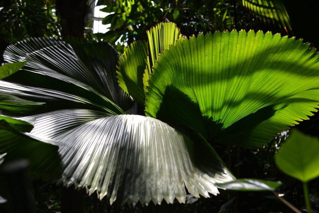 Fotografia z poznńskiej palmiarn