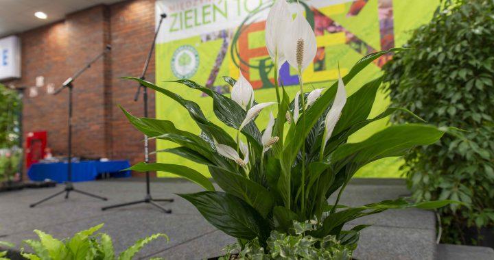 skrzydlokwiat na tle sceny targów